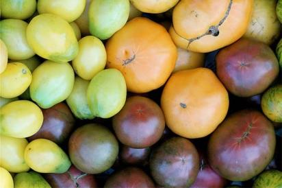 Great Heirloom Tomatoes