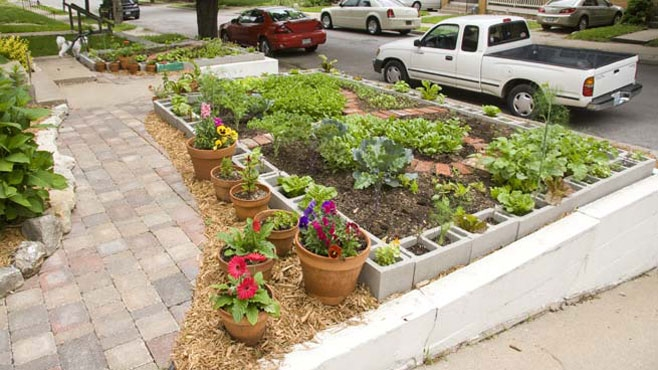 Urban food gardens